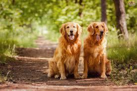 maledogs