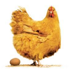 chickkenandegg