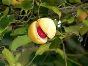nutmet