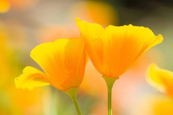 magnesiumflower