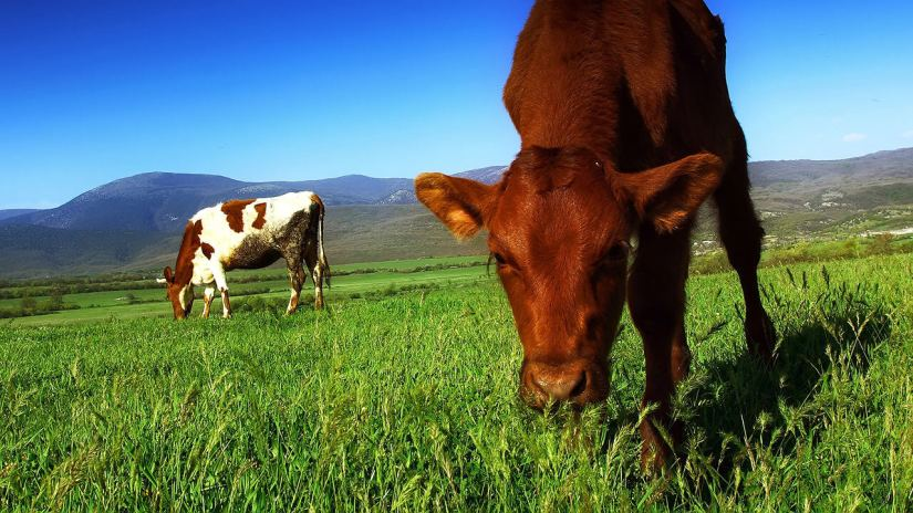 grass-fed-beef-climate-change