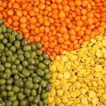 lentils2